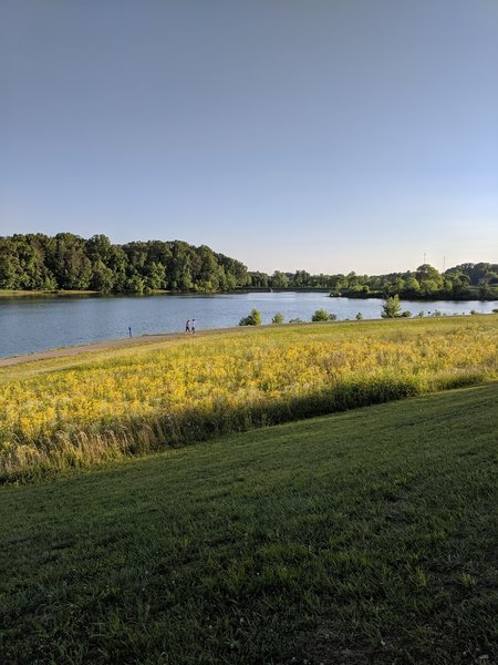 Overlooking the lake and meadow.