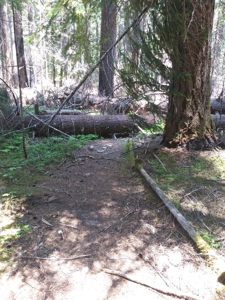 Typical of all the trails in the area. Large trees cross it in many places.