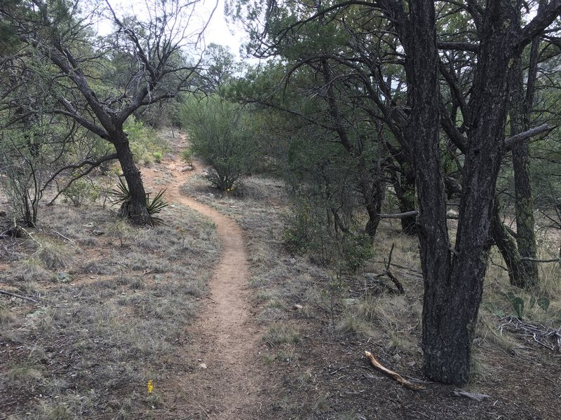 Singletrack through the piñon pines