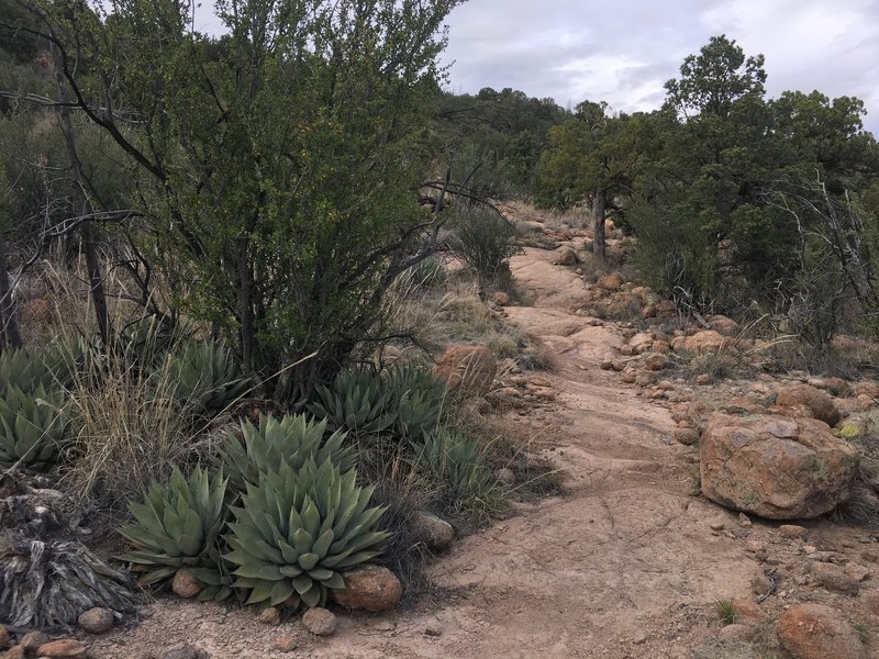 Rocky trail going around Gomez Peak.
