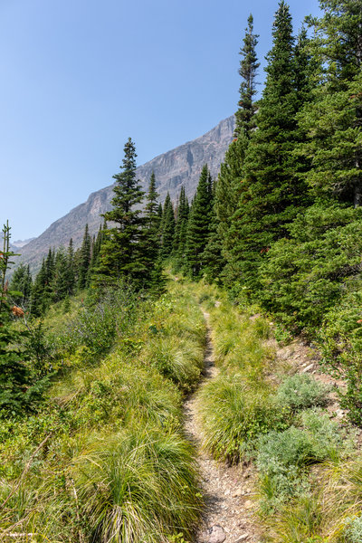 The narrow but steep trail to Triple Divide Pass.