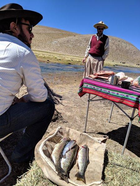 Trout ready to be consumed - Rio Los Patos, La Puna, Argentina