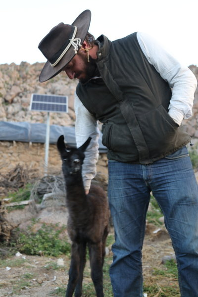 """Pet"" llama at Compuel"