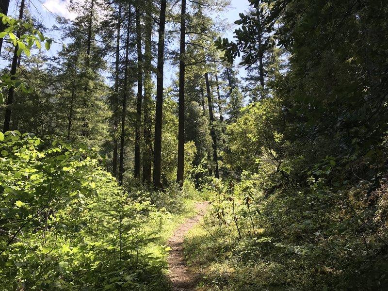 New River Trail near Barron Creek in western Trinity Alps Wilderness