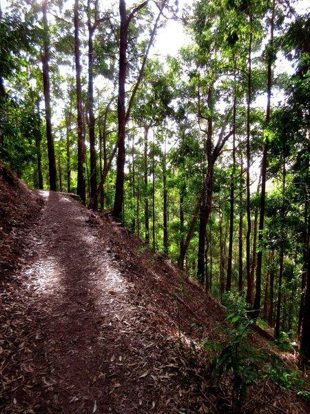Typical Contour Path