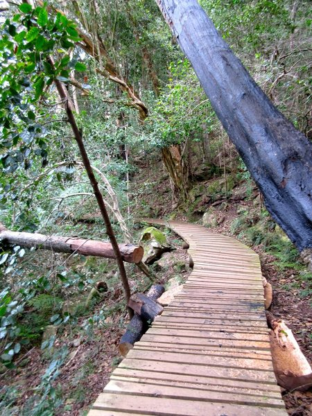Part of the fun of Newlands Forest is running the boardwalks.