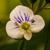 A unique blossom near the North Trail