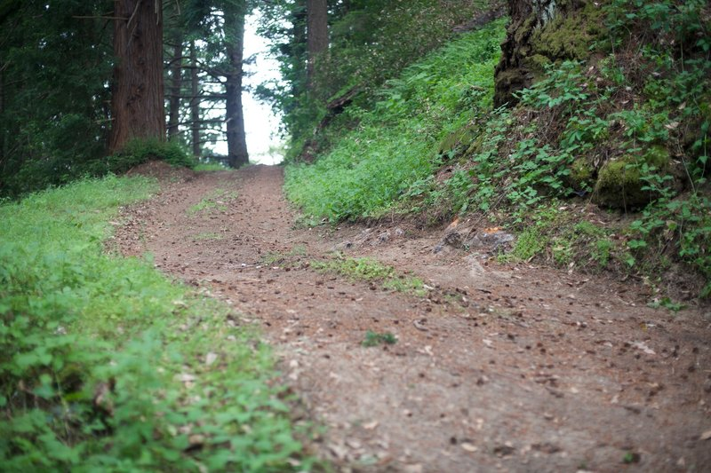 You can see how steep portions of the Alma Trail are as it climbs toward the intersection with the Redwood Springs Trail.