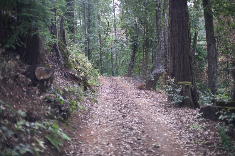 The Redwood Springs Trail levels off as it approaches the Alma Trail.