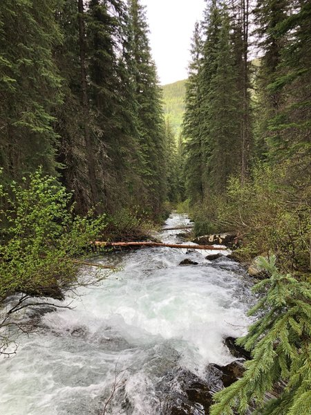 South Fork Trout Creek