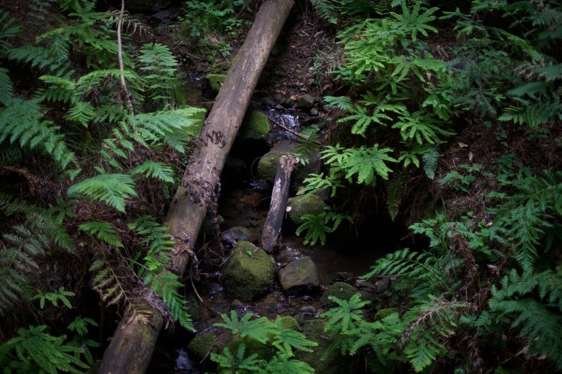 A small creek works its way downhill, and helps provide the surrounding forest with life.