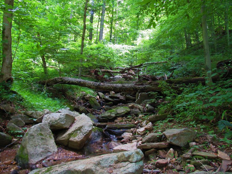 Small stream crossing Alternate Thru Trail.