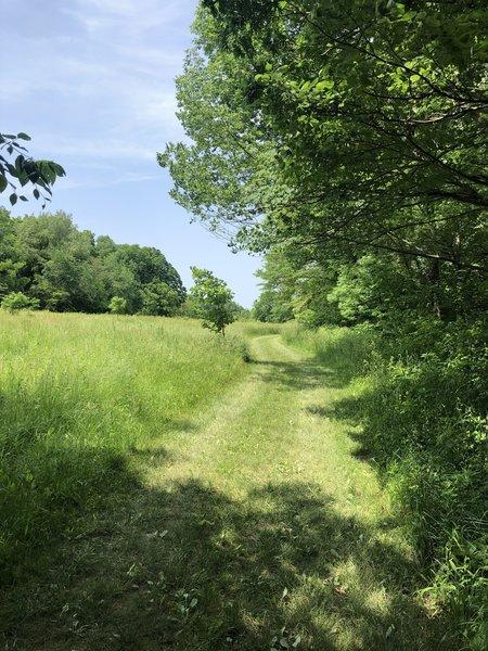 Walking past some nice old oak trees.