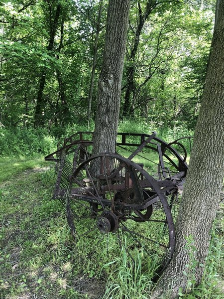 Tree growing through old farm implement.