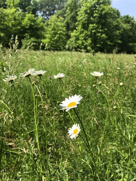Wildflowers in the grassy area.