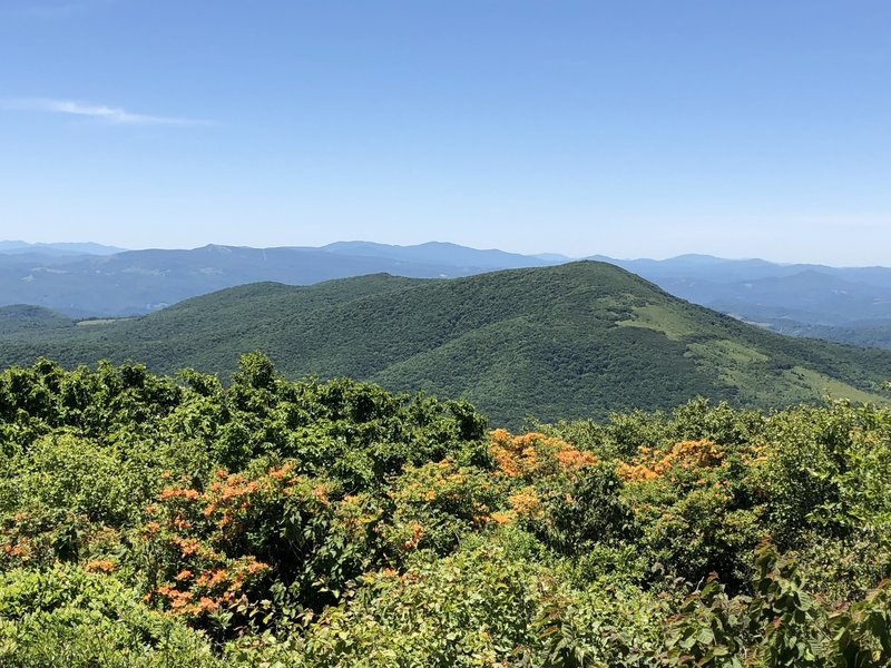 South view from summit of Elk Knob State Park Trail, June 2019.