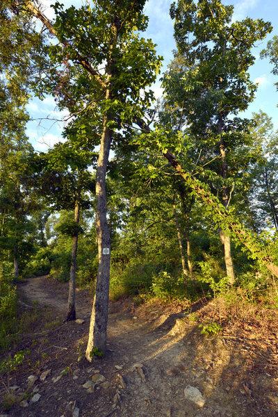 Buffalo Creek Preserve Trail