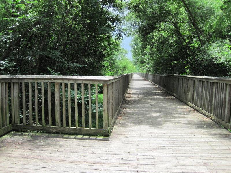 Elevated boardwalk at Mallard Creek Greenway.