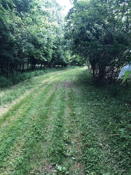 Grass on the trail -- most of Mingo Trail is grassy. Dew will soak your shoes eventually.