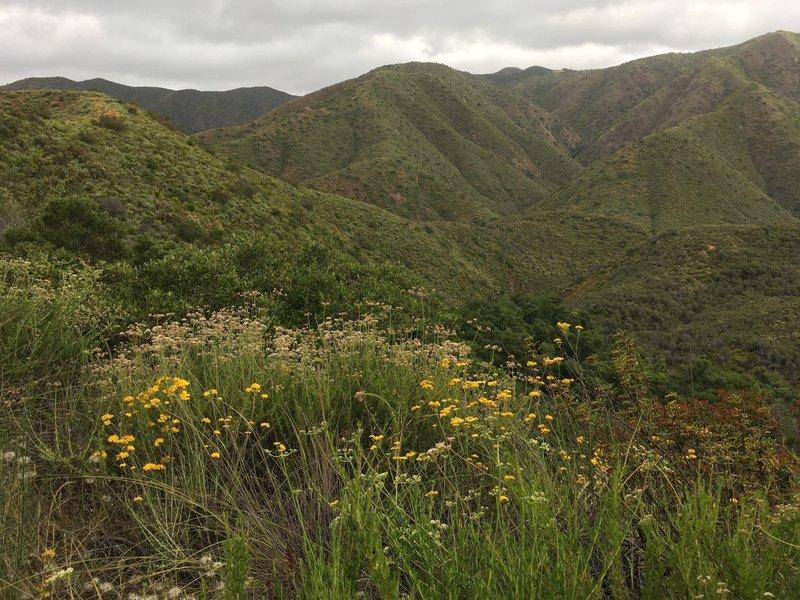 Steep slopes of Santa Ana Mountains.