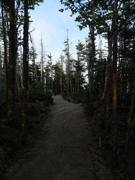 Coast Guard Trail, West Quoddy Head, Maine.