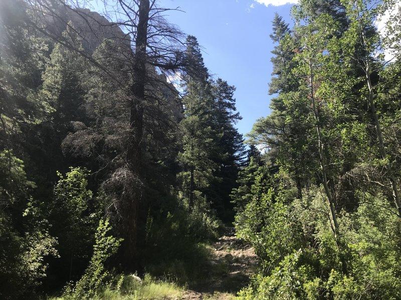 Comales Trail #22 New Mexico