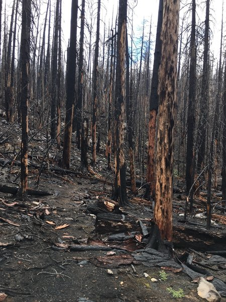Trail is good from Separation Lake Trailhead to Buck Meadow, but then you get into the 2017 Separation Creek Fire.