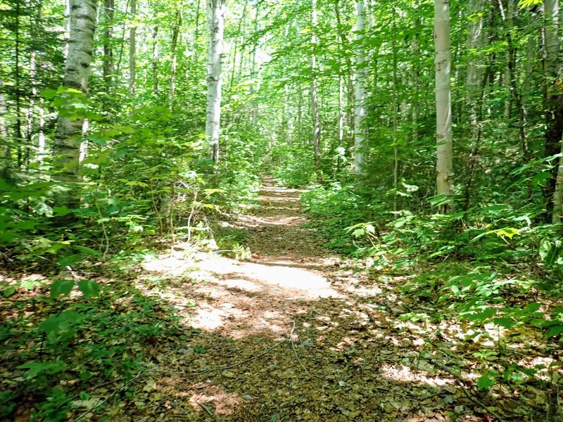 The trail narrows after crossing the gate at the Franconia Brook tent site, and remains a singletrack trail to the end.