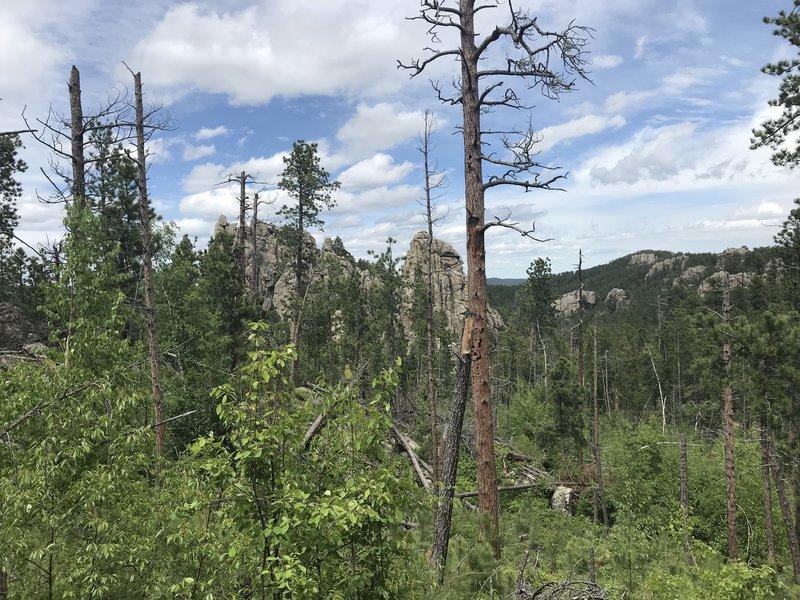 Looking north into the Black Elk Wilderness.