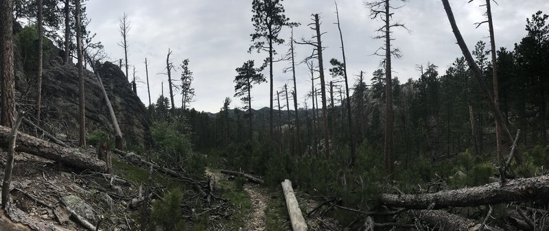 Looking south into the Black Elk Wilderness - panorama.