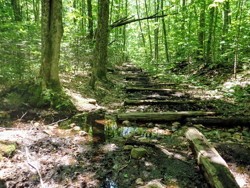 Long sections of the Pemi Loop are pockmarked with wooden logs.