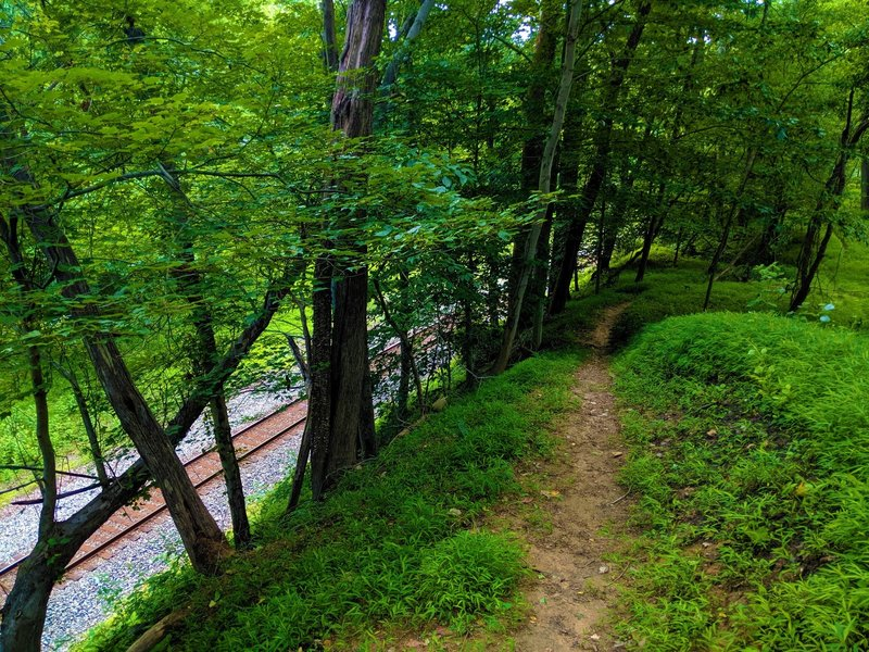 View of the Wood Marr trail as it follows the ridge above the railroad and the Patapsco River.