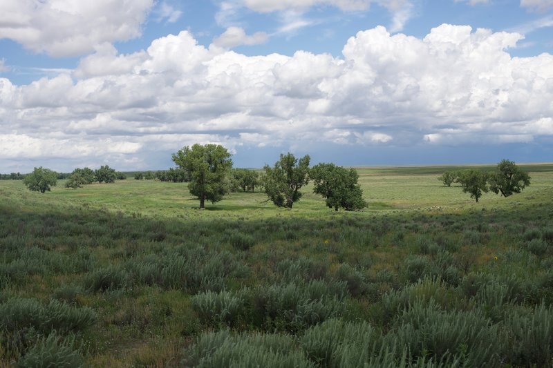 View of the trees that line Sand Creek.