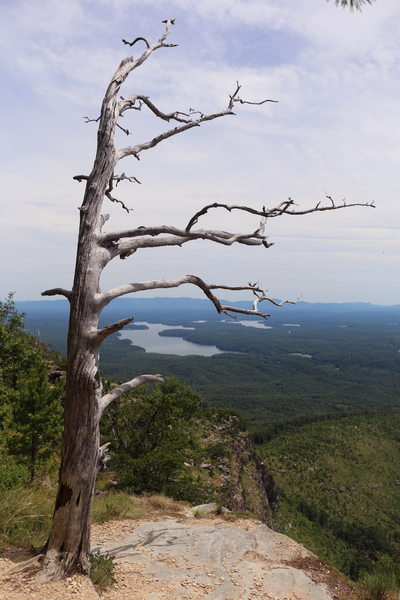 The decaying tree around halfway up the Shortoff Mountain Trail. It reminds me of the Jeffery pine that was once atop Sentinel Dome.
