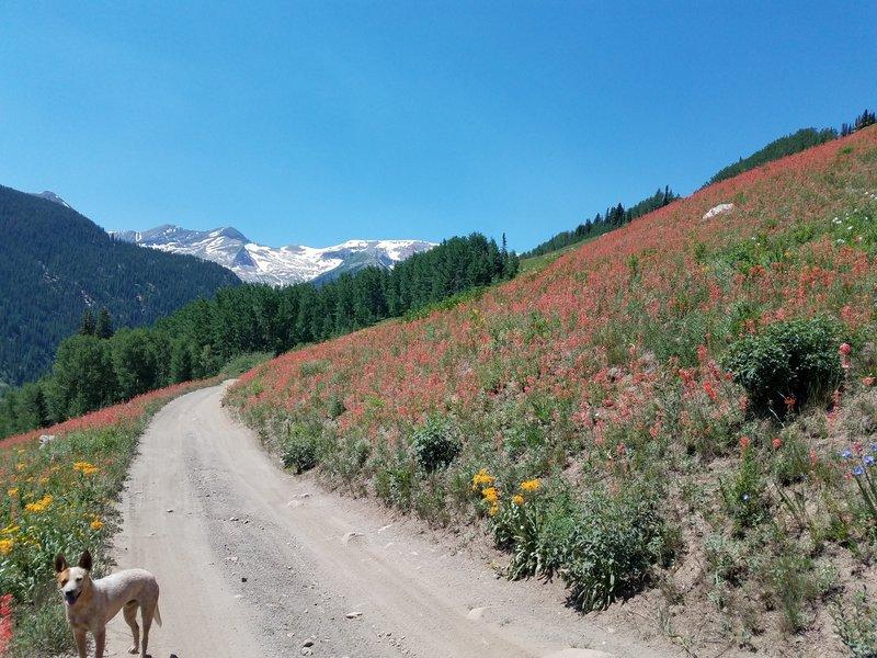 Wildflowers-Lead King Basin