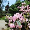 The flower across mansion driveway