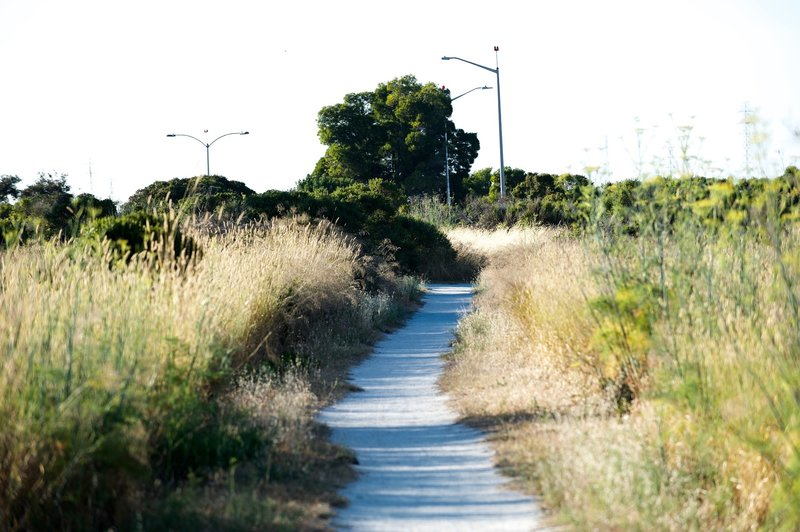 The trail is made up of decomposed granite and crushed oyster shells and makes its way along the edge of the marsh. The trail, shared by bikers, hikers, and runners, is wide enough for 2 people to pass each other, but that's about it.
