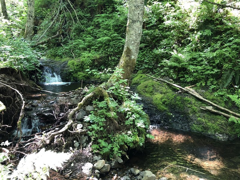 Sweet little falls and wading pool