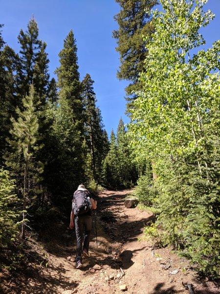Ascending the Beaver Meadows Trail.