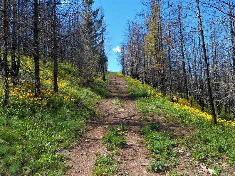 Beautiful wildflowers along the trail.
