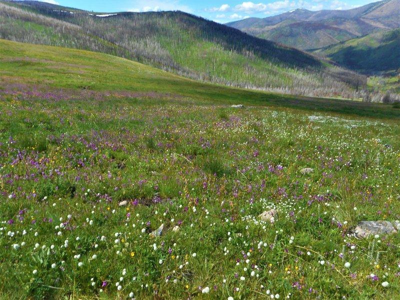 Wildflower meadow along the trail.