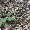 Great short hike. Limited elevation changes. Keep your eyes on the trail as we saw this monster timber rattlesnake on 7/1