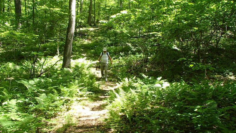 Downhill towards Stony Brook
