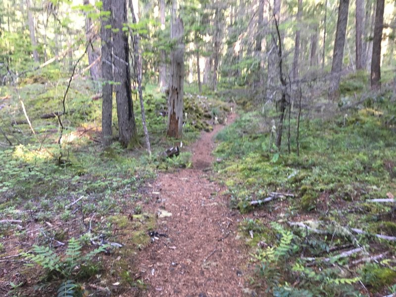 The approach through the forest