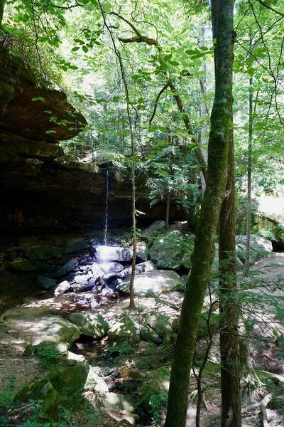 Fall Creek Falls -- photo from July 2019. Based on discussion with other hikers who are familiar with this hike, water flow in the area was less than average for this time of year.