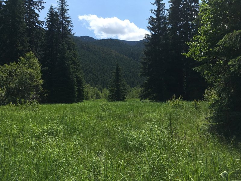 Meadow near North Fork of Tieton River