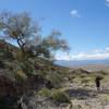 Palo Verde tree near where trail heads up the rocks