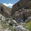 Hiker in Smoke Tree Canyon during a super bloom