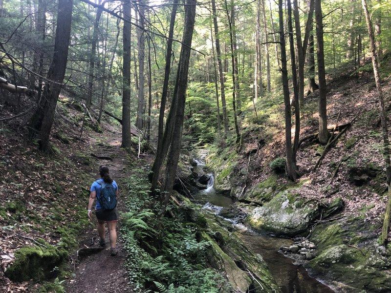 Hiking Along Spruce Brook