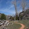 Singletrack though Kolob Canyon